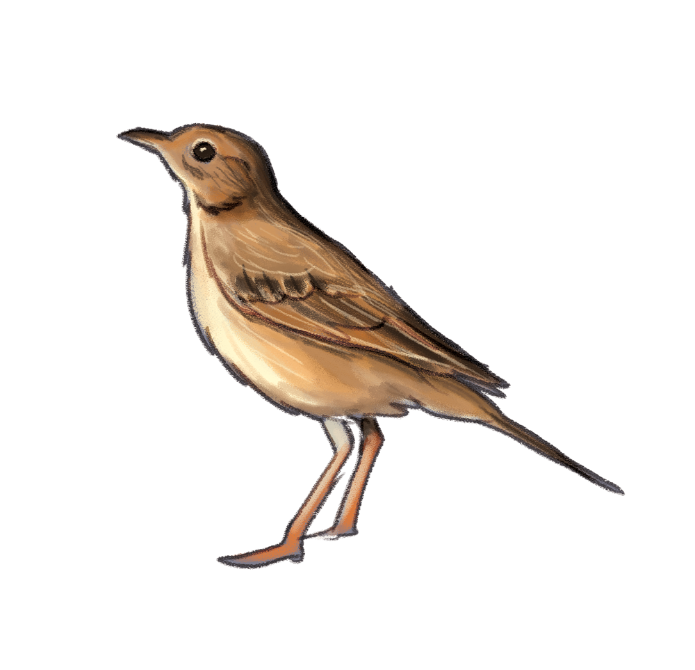 richard'spipit.png