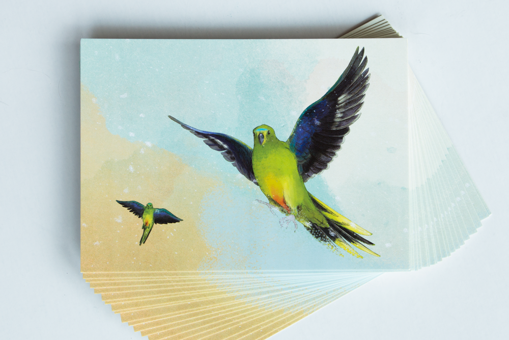 Orange-Bellied-Parrot-postcard.png