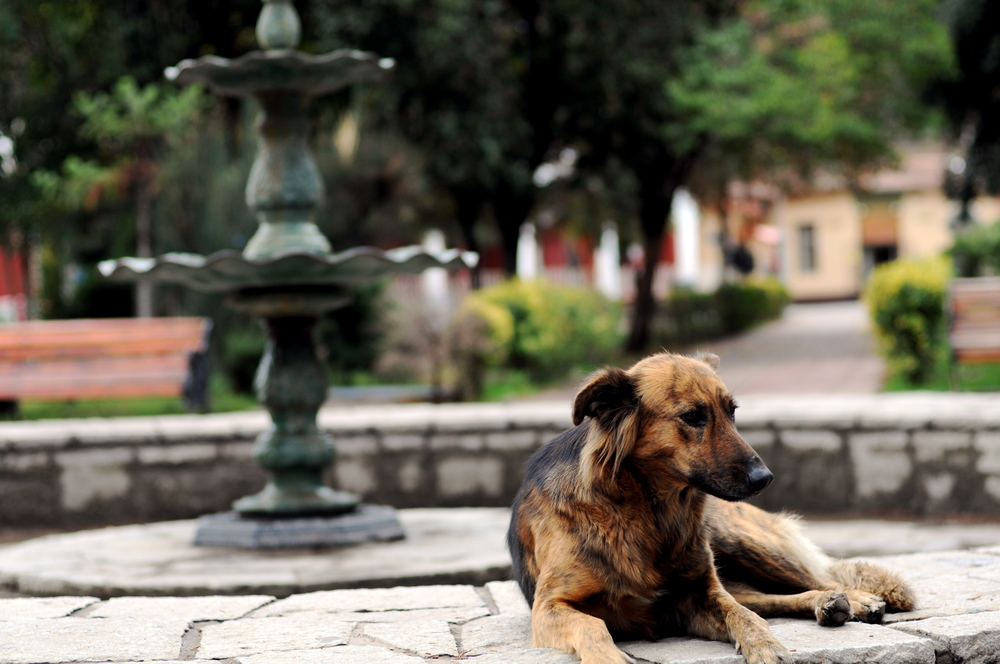 The Dogs of Santiago