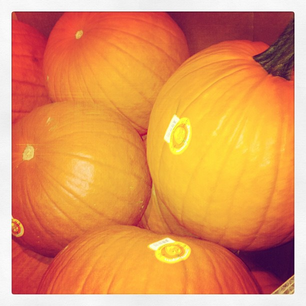 Fall is finally here! Harris Teeter is now selling pumpkins!  (Taken with  Instagram )