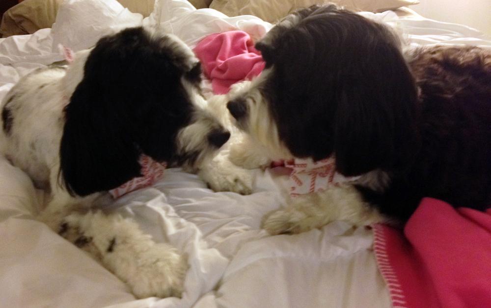 Cooper & Zuzu