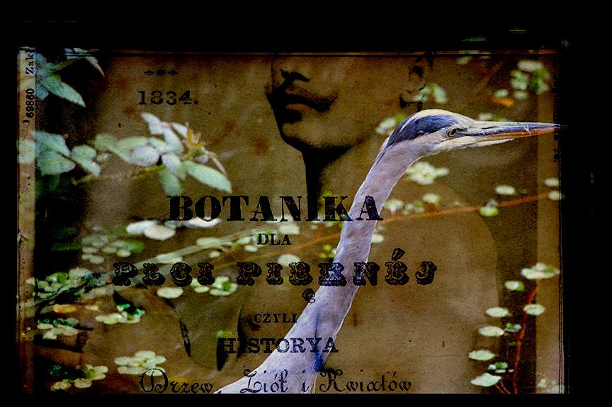 BotanikaDlaPlciPieknej.jpg
