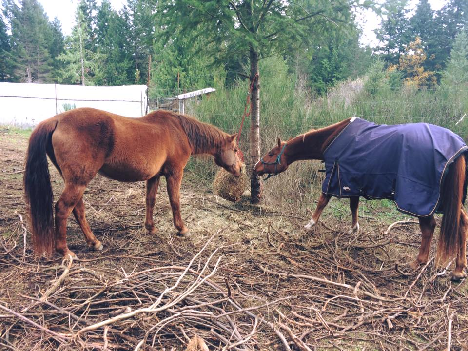 Two horses early days Honour blanket.jpg