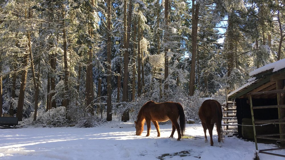 Two horses in snow by barn.jpg
