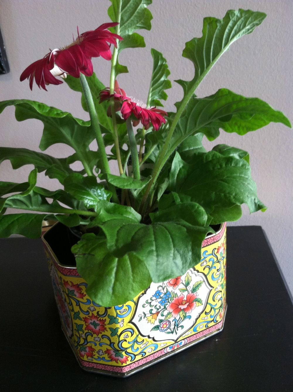 I splurged on this tin (a whole dollar) but it's got a cute lid attached and works great as a temporary planter.