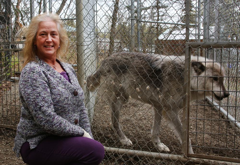 wolf 8.jpg