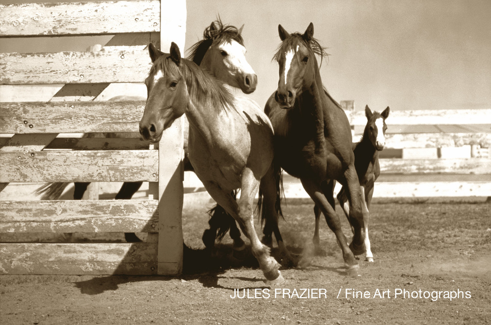 Faded Icons of The West_Binion's Horses, Montana.jpg