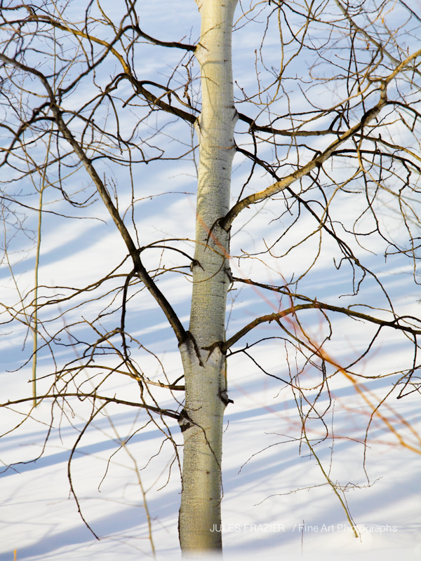 Jules Frazier Fine Art _08-02-19-128-White Winter.jpg