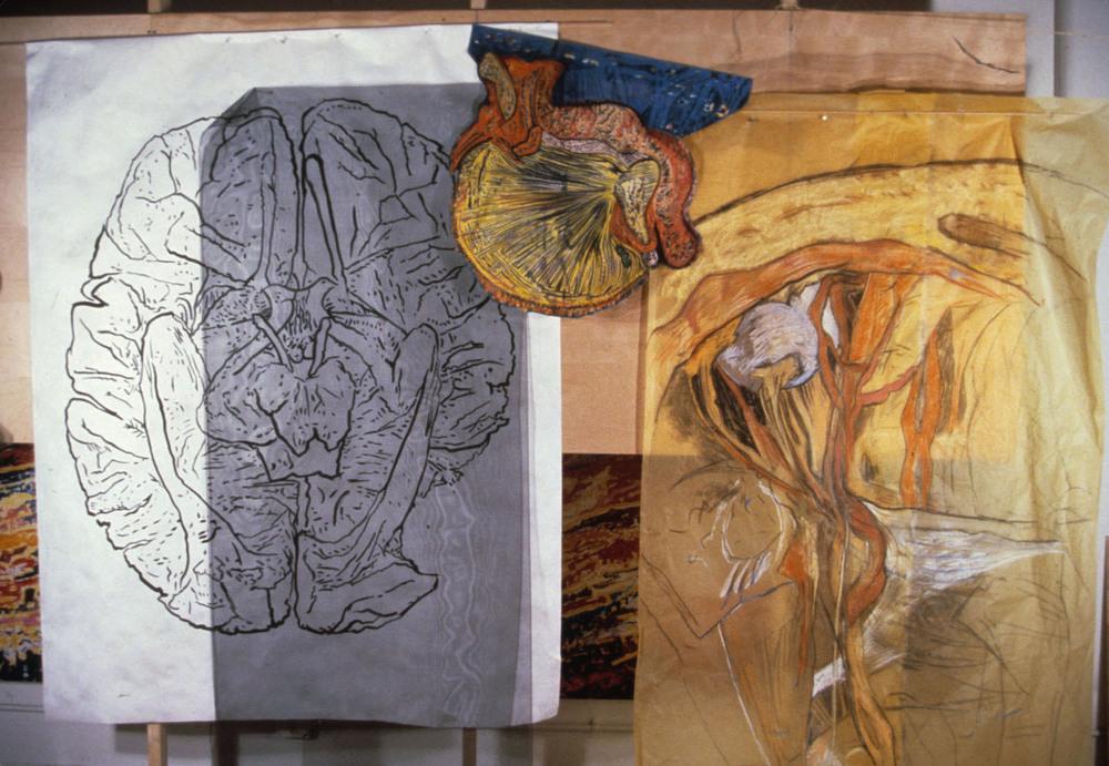 Mimi.Gross.anatomy.001.jpg