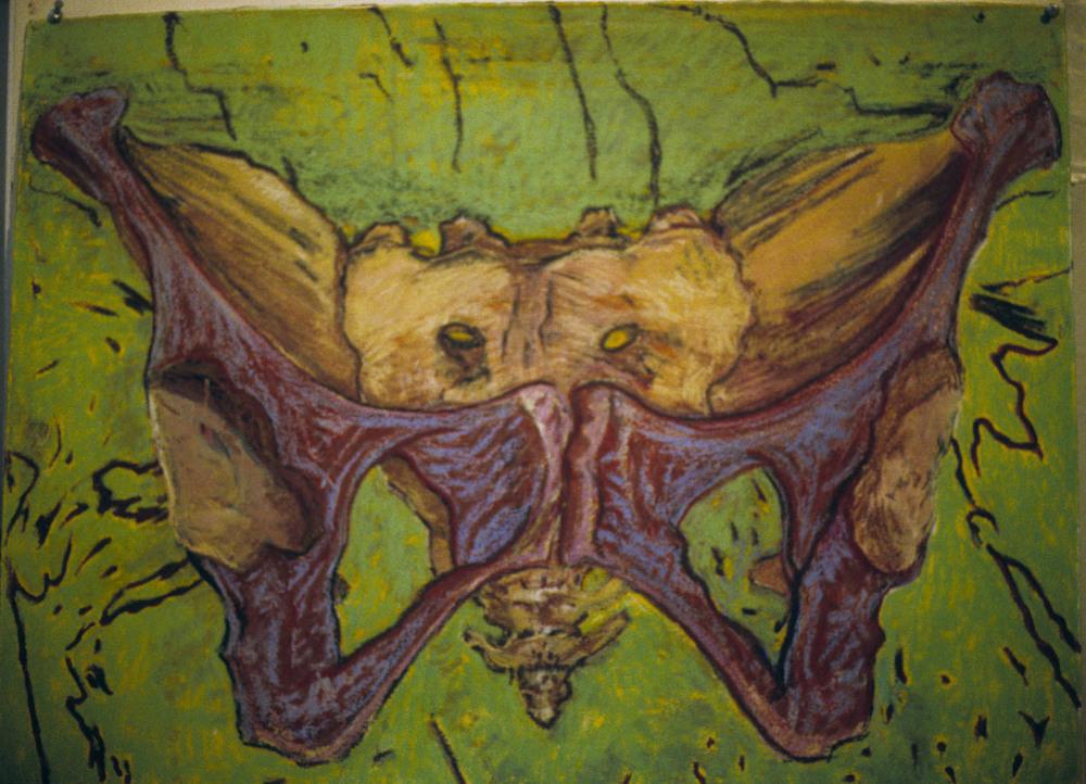 Mimi.Gross.anatomy.030.jpg