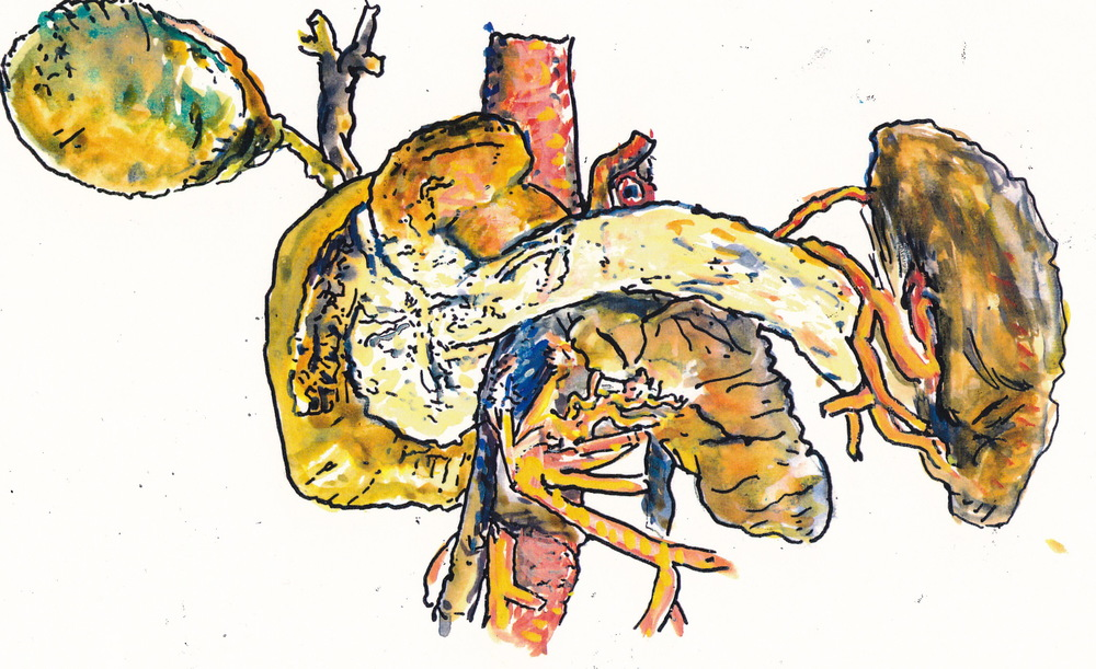 Mimi.Gross.anatomy.032.jpg