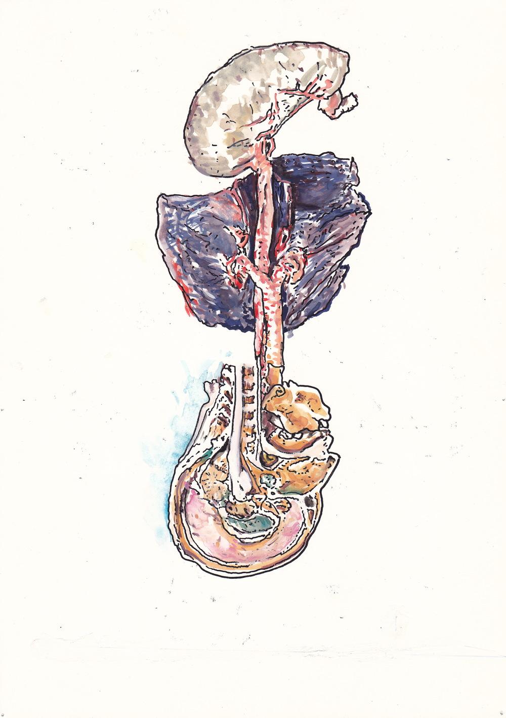 Mimi.Gross.anatomy.033.jpg