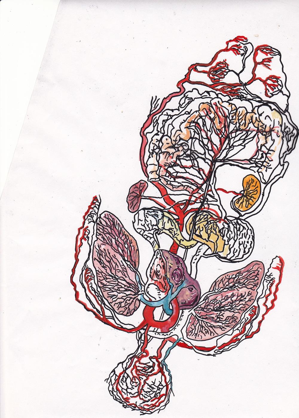 Mimi.Gross.anatomy.034.jpg