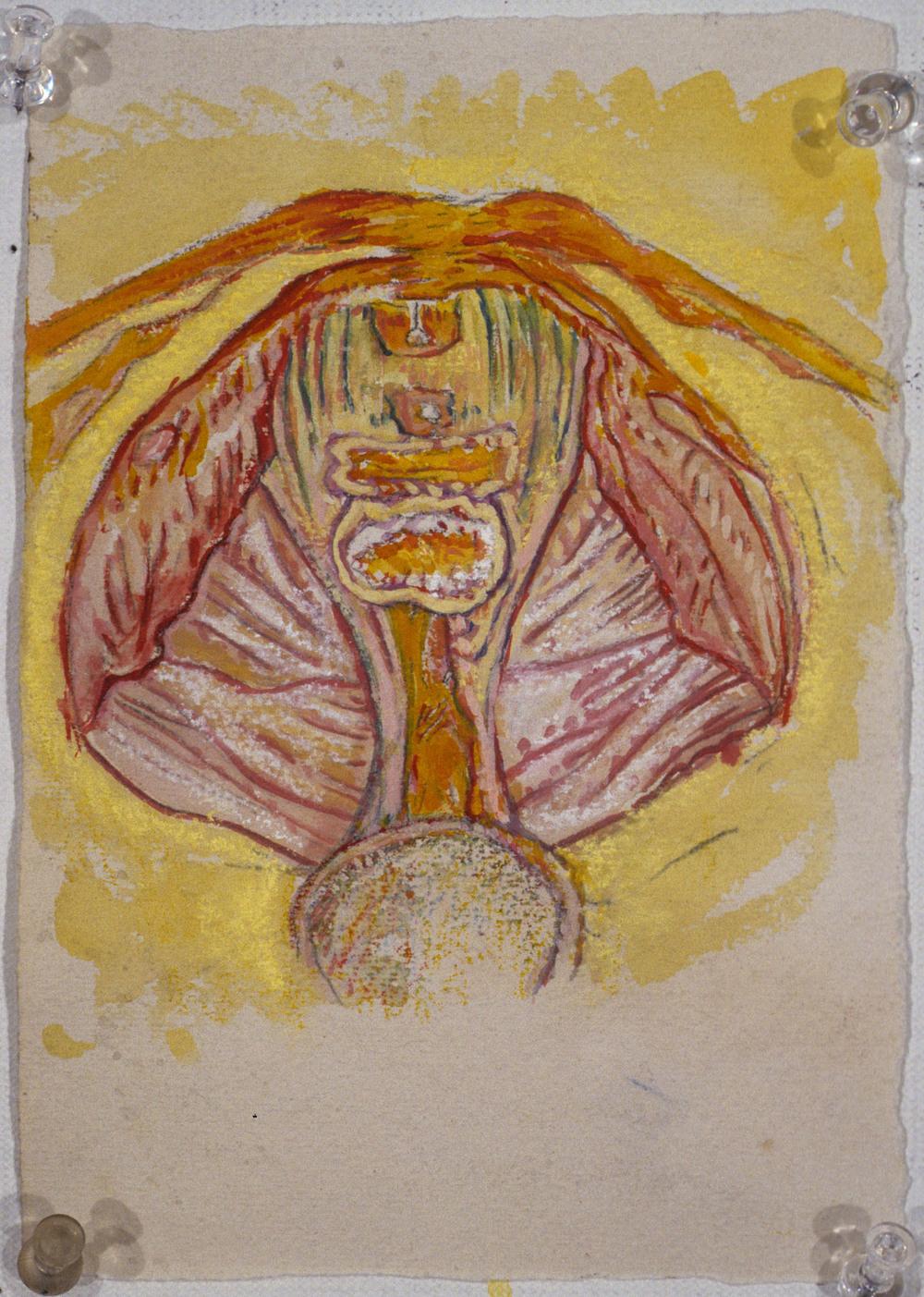Mimi.Gross.anatomy.038.jpg