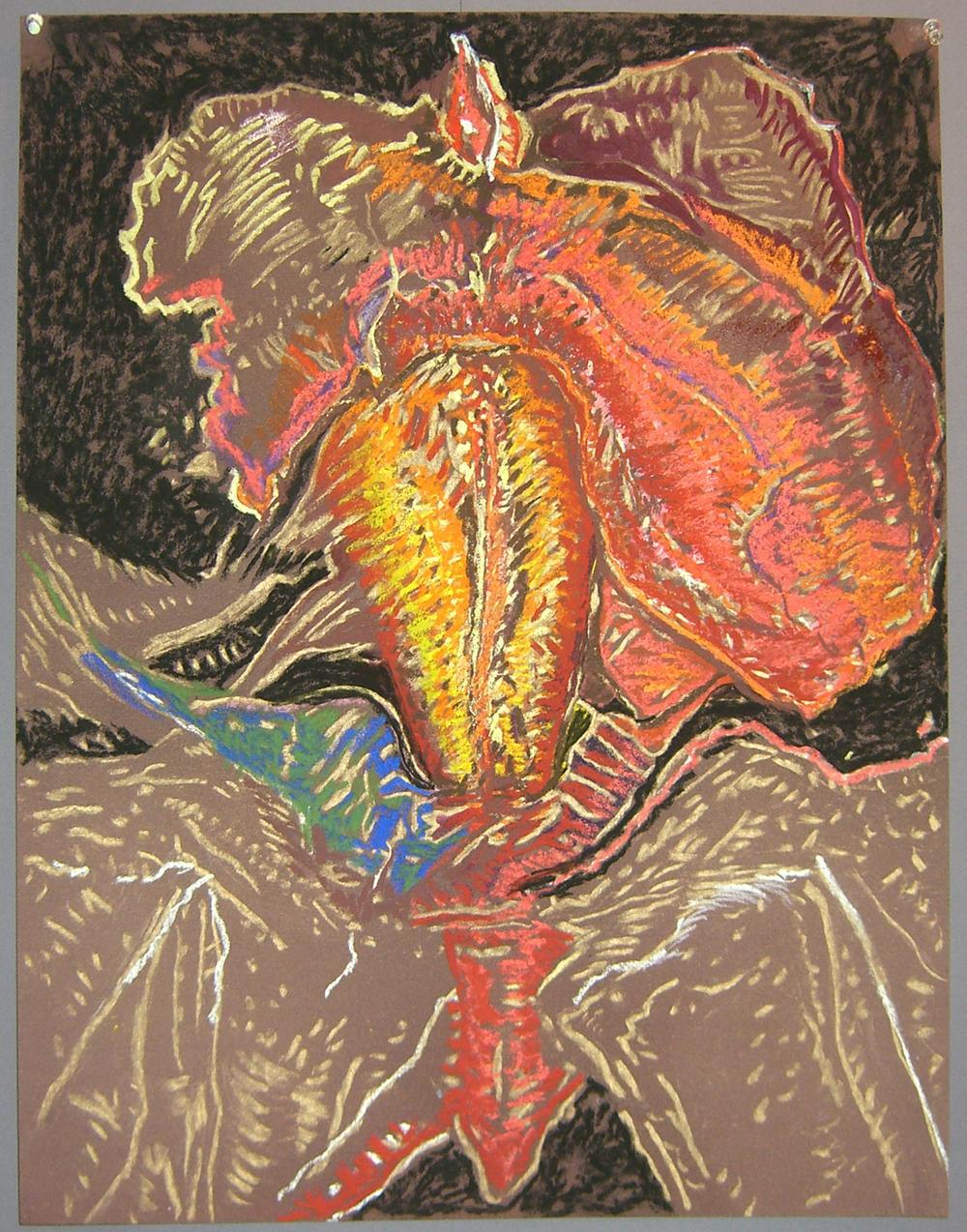 Mimi.Gross.anatomy.036.jpg