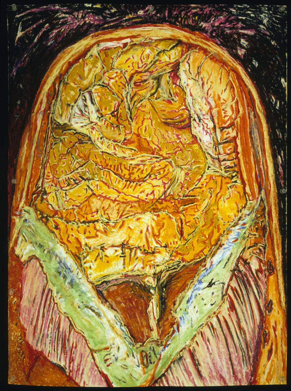 Mimi.Gross.anatomy.039.jpg