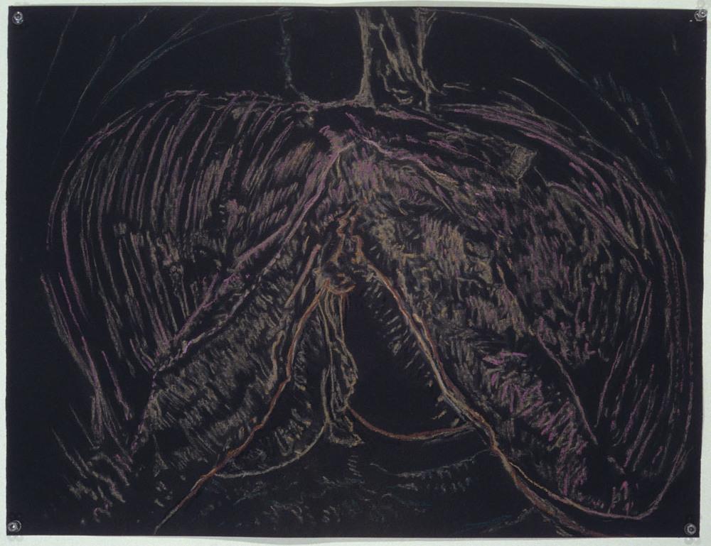 Mimi.Gross.anatomy.046.jpg