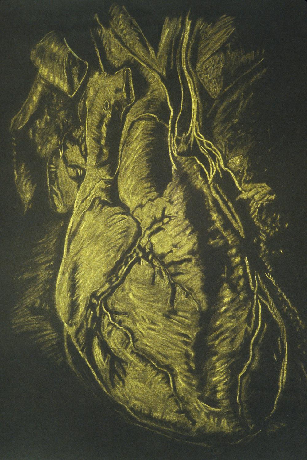 Mimi.Gross.anatomy.045.jpg