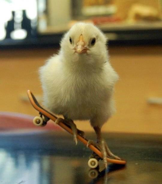 skater chick.jpg