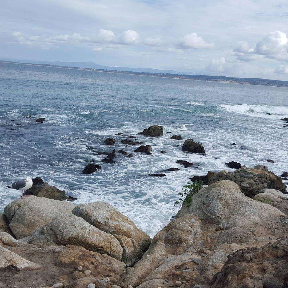 January 30: This one makes me especially jealous. Pacific Grove is one of my favorite places on Earth.
