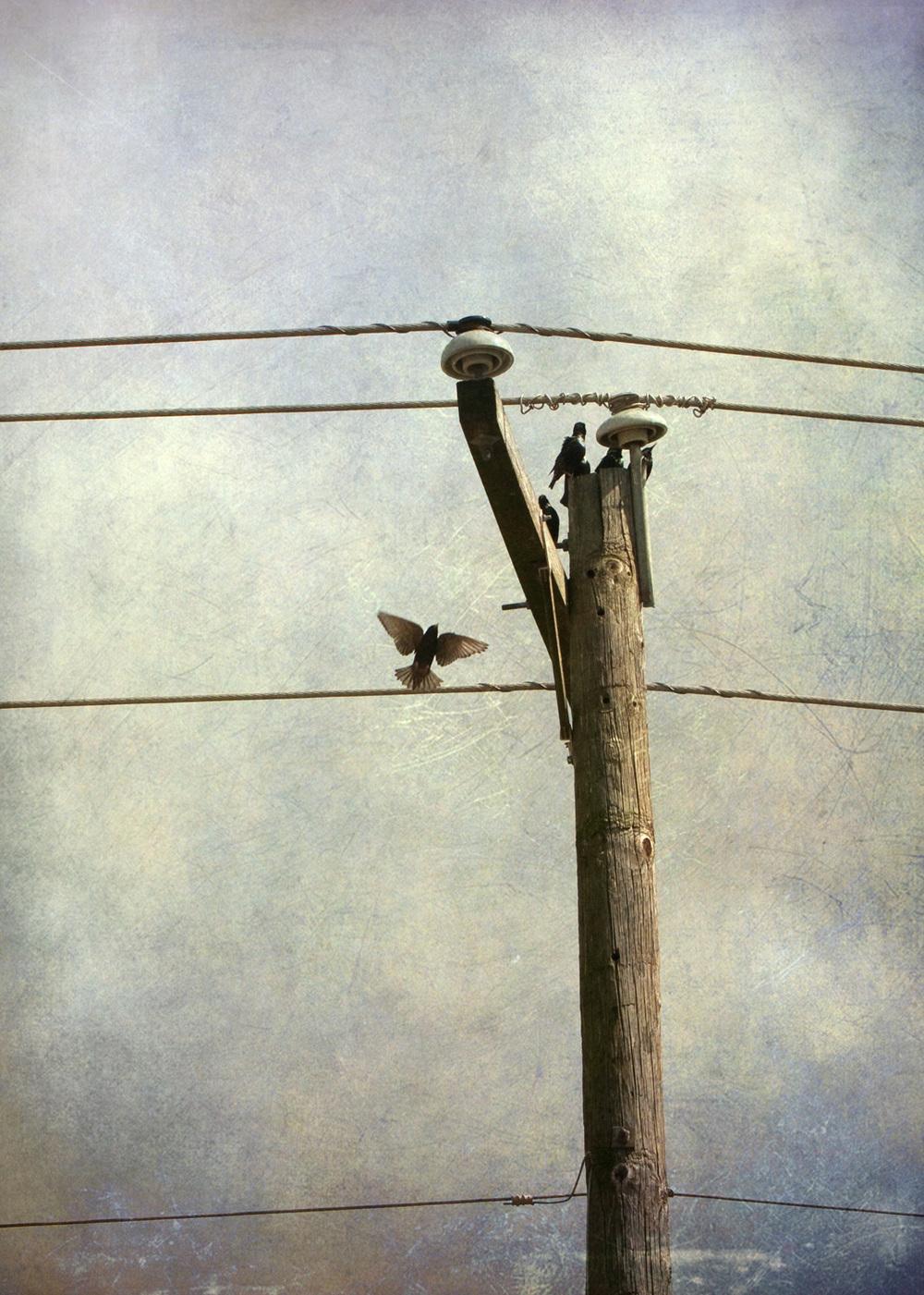 birds_at_dusk_01-7x5-1319.jpg