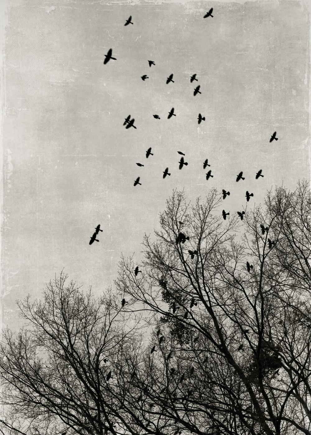 birds_at_dusk_02-7x5-7080.jpg