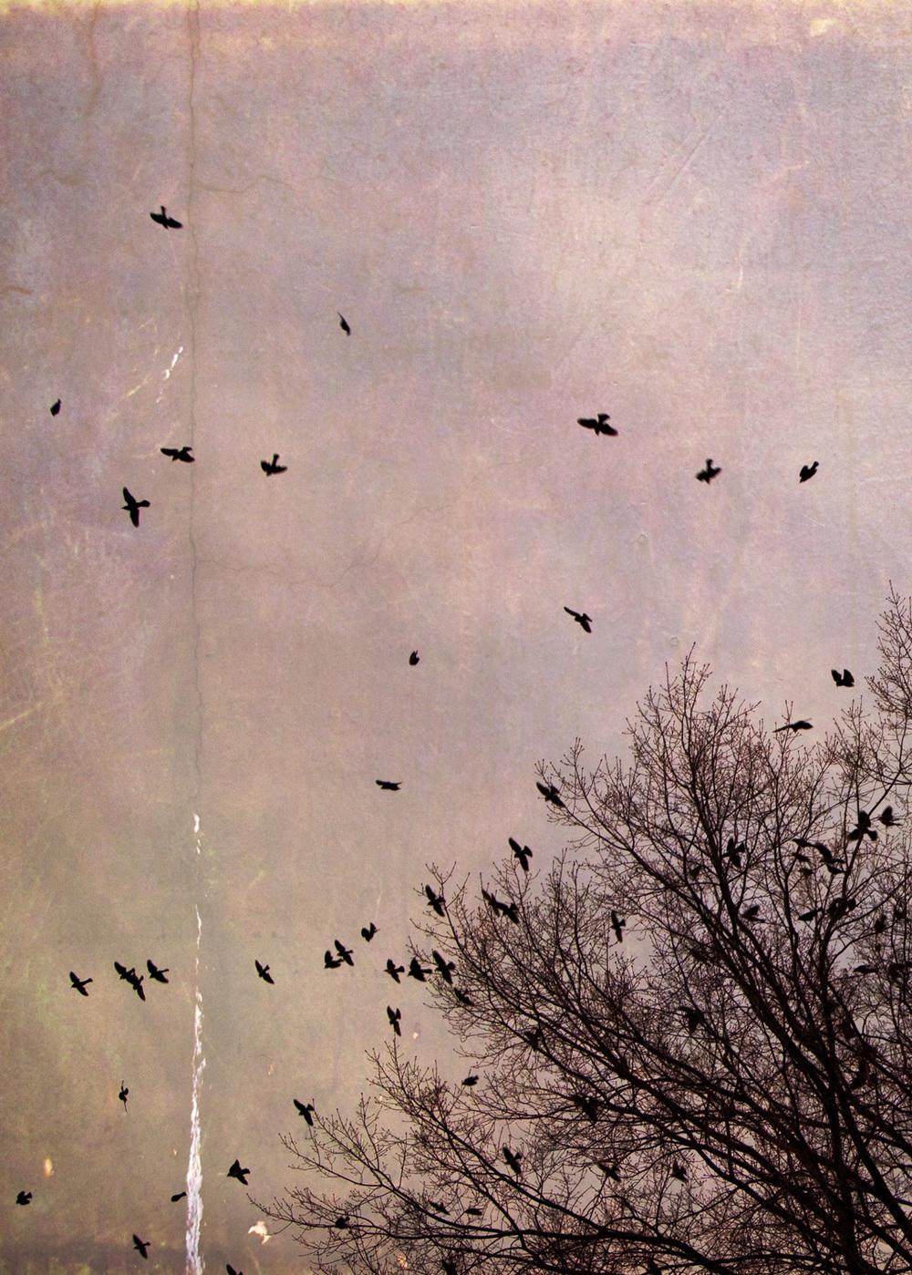 birds_at_dusk_03-7x5-7084.jpg