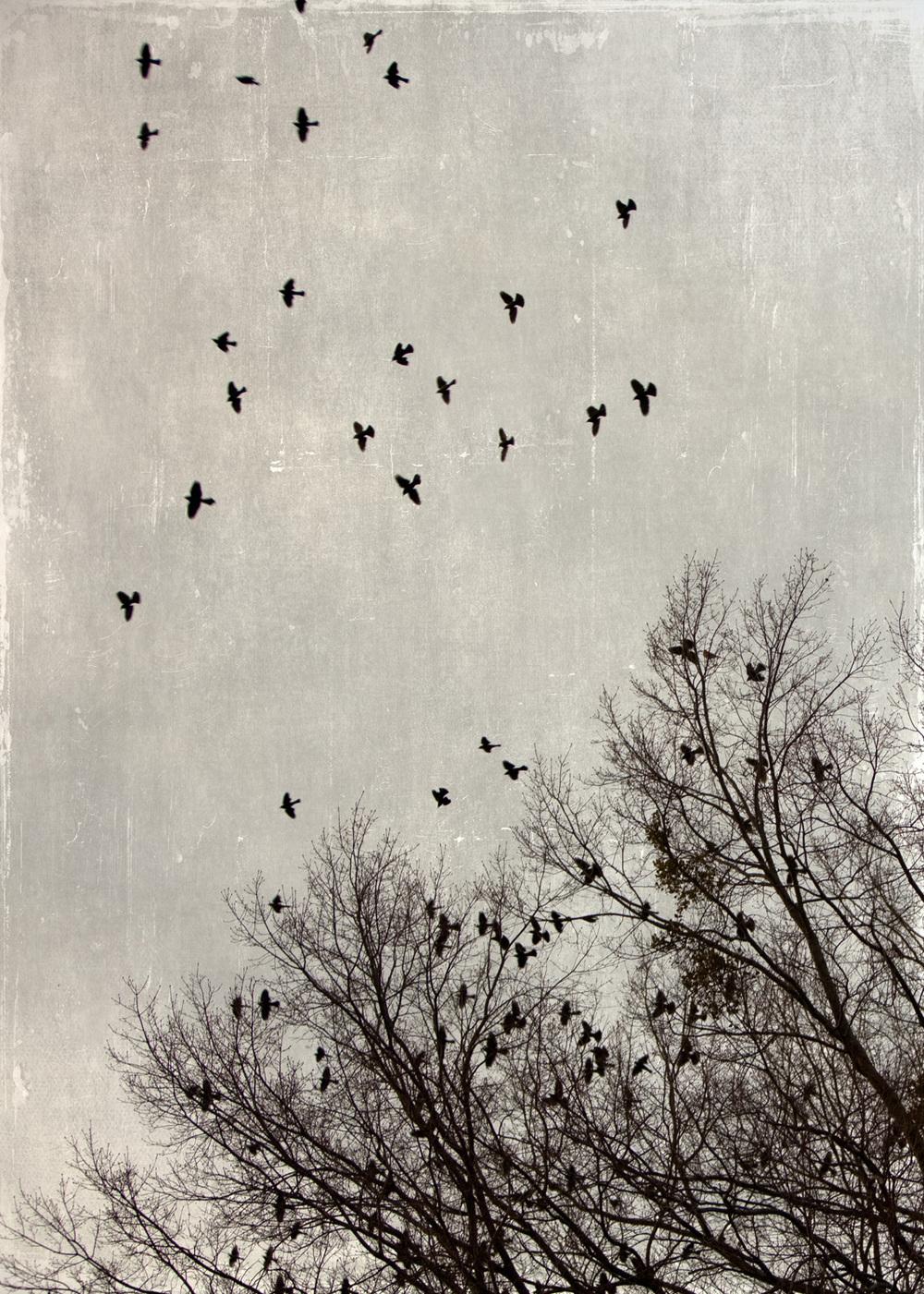 birds_at_dusk_05-7x5-7082.jpg