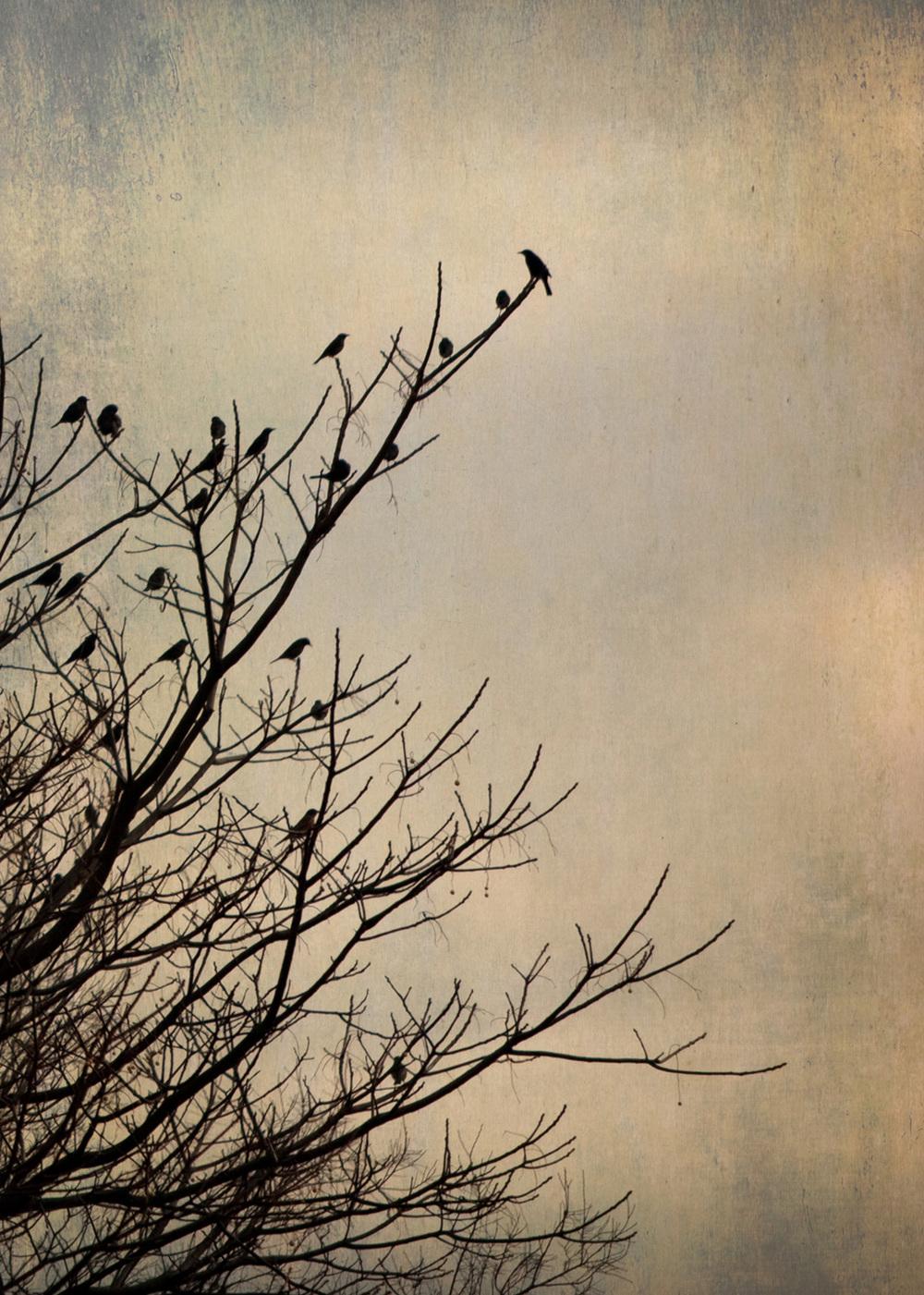 birds_at_dusk_06-7x5-7107.jpg