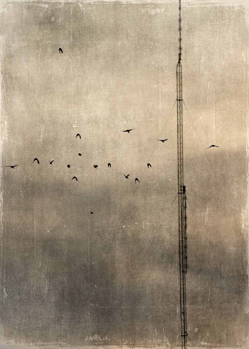 birds_at_dusk_07-7x5-7133.jpg