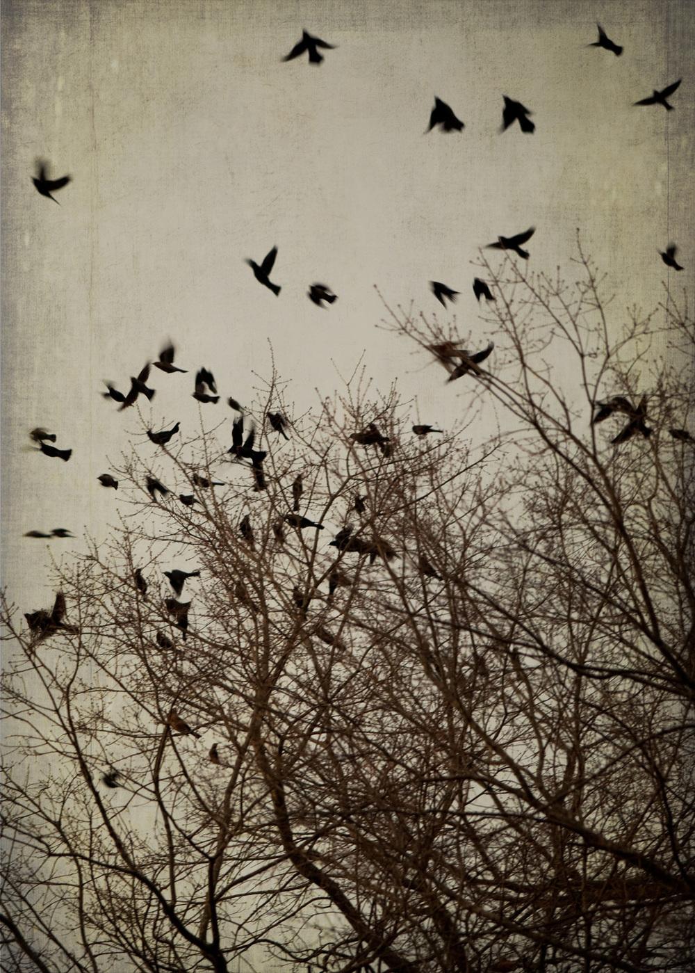 birds_at_dusk_09-7x5-7254.jpg