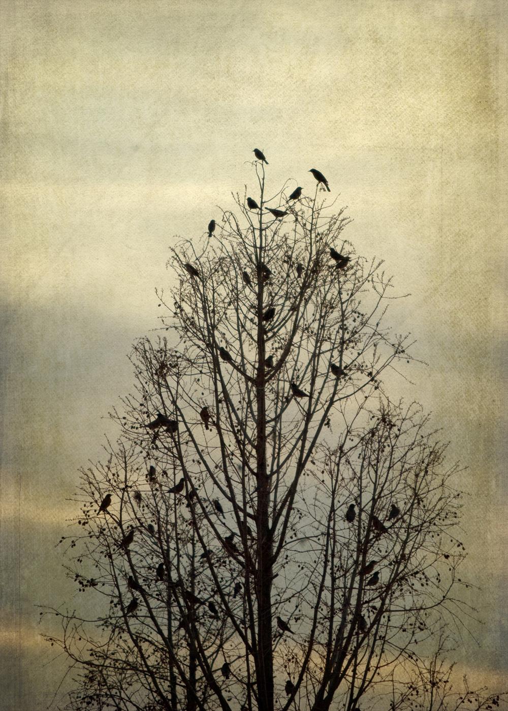 birds_at_dusk_11-7x5-7328.jpg