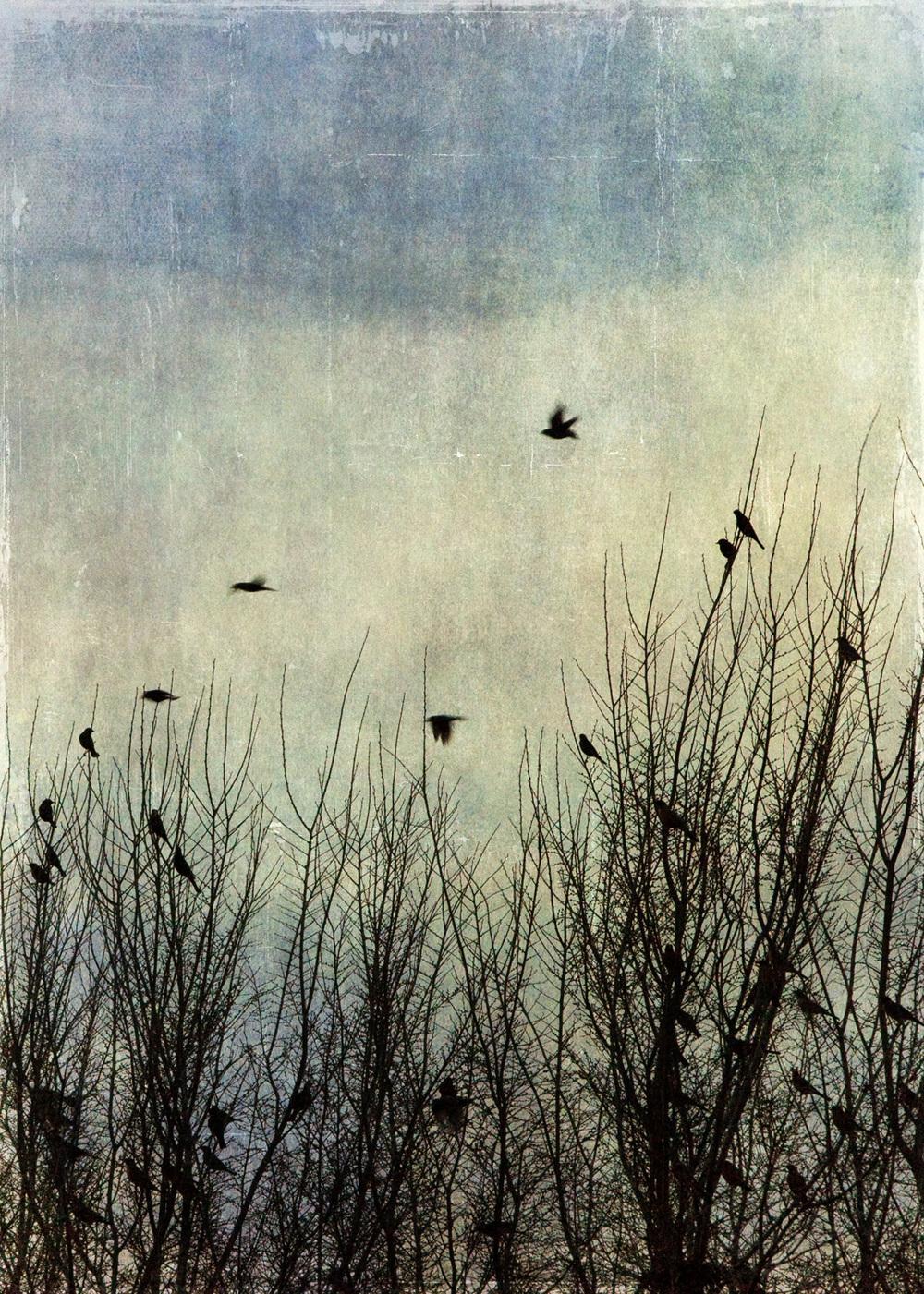 birds_at_dusk_12-7x5-7621.jpg