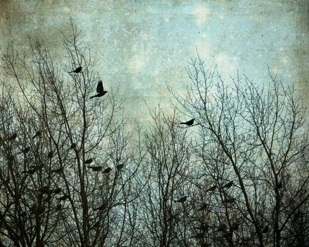 dusk-birds-4x5r-3840.jpg