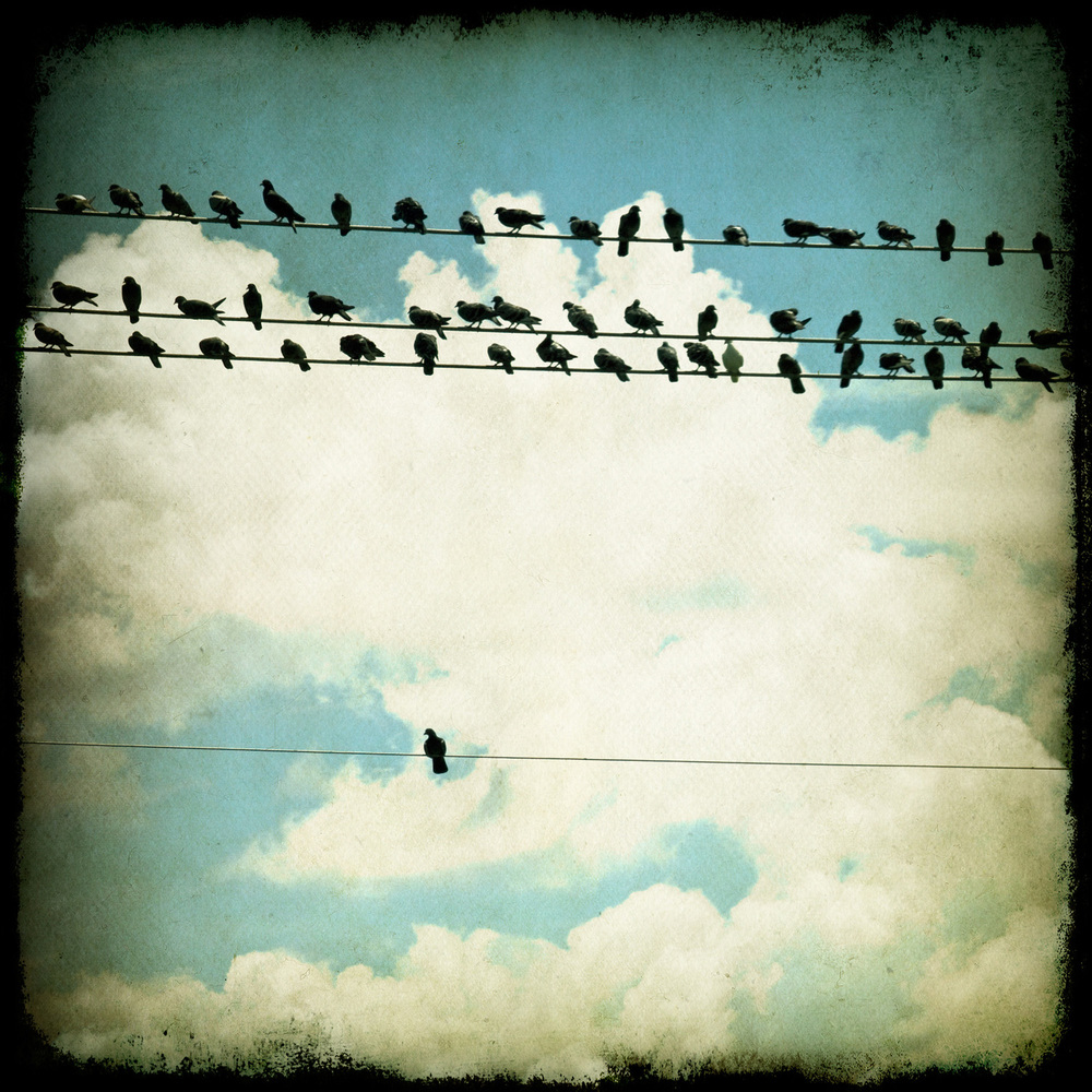 many_and_one-birds-sq-1077.jpg