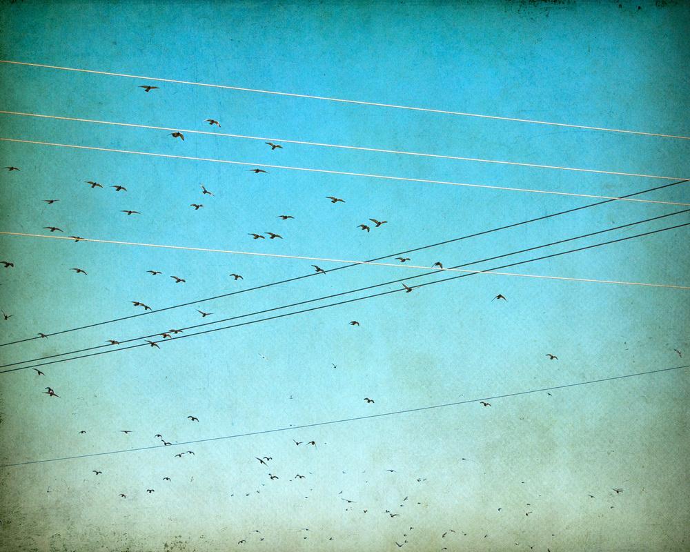 migration-birds-4x5r-3145.jpg