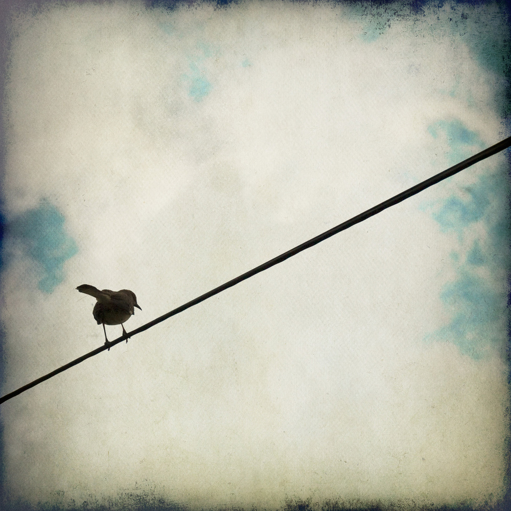 one-birds-sq-3543.jpg