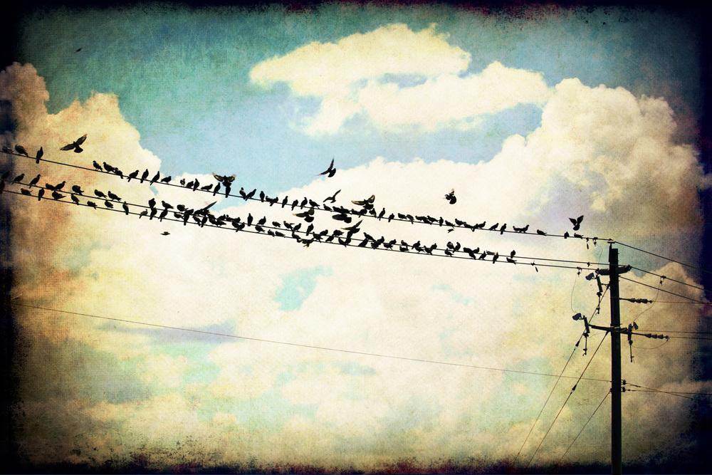 slowly-birds-2x3r-1047.jpg
