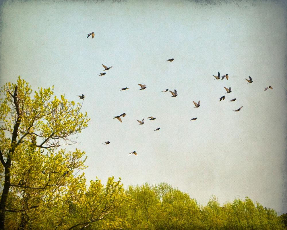 summer-birds-4x5r-4240.jpg