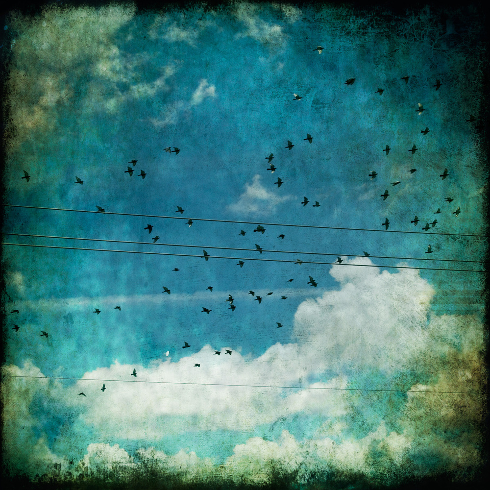 wanderlust-birds-sq-1099.jpg