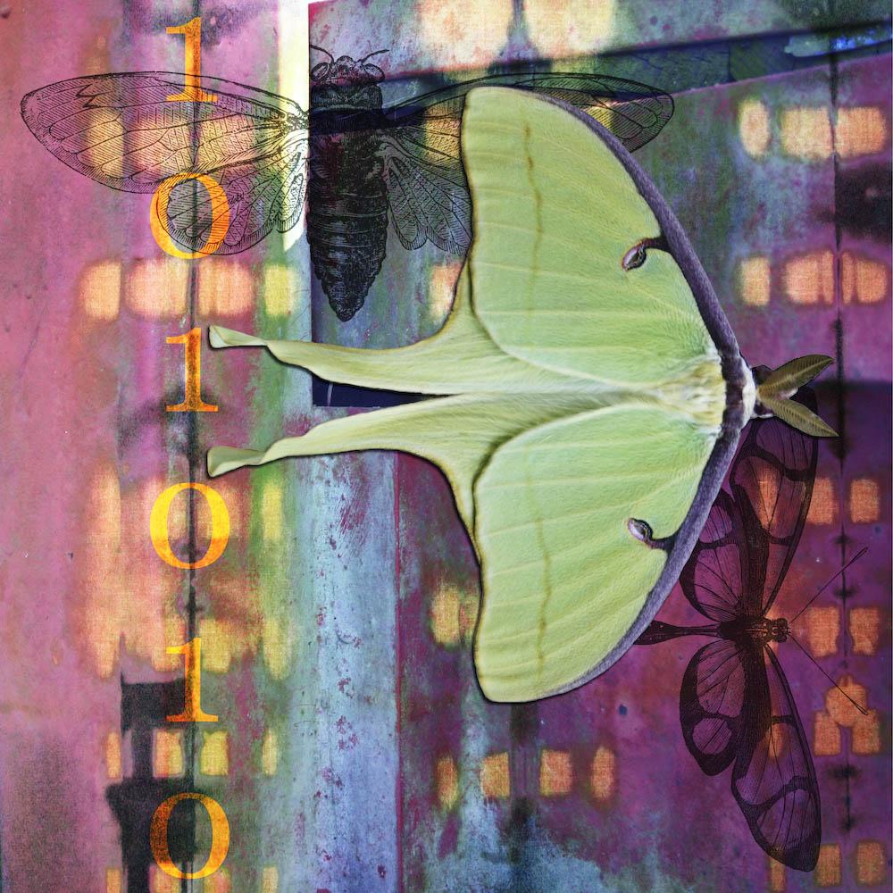 mckellar_insect_08.jpg