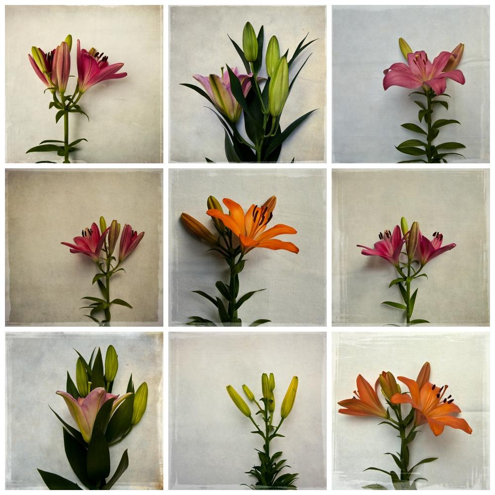 mckellar-botanical-lilies.jpg