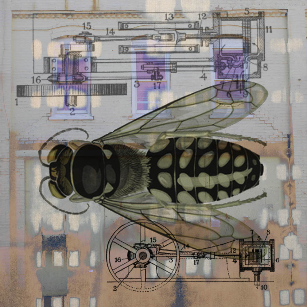 mckellar_insect_05.jpg
