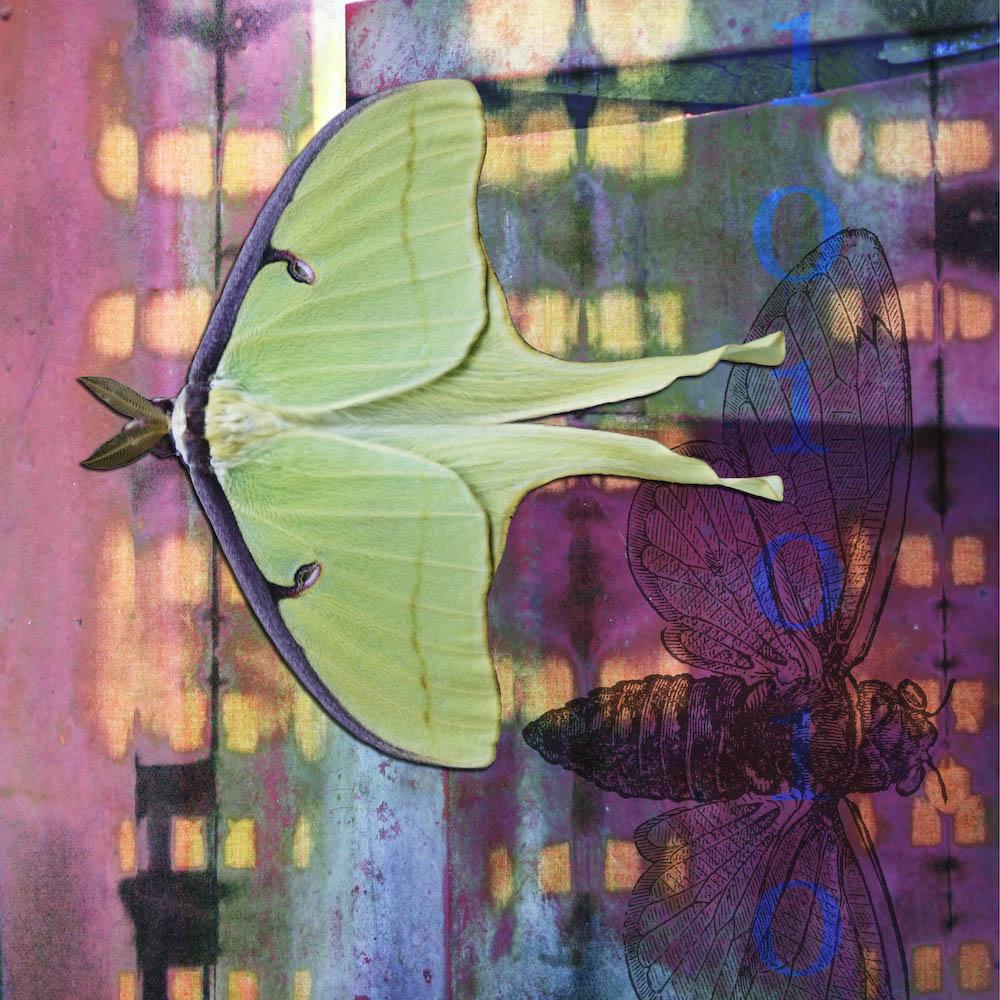 mckellar_insect_09.jpg