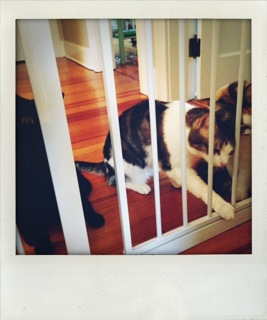 Kitty Gates