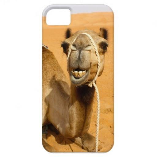 camel iphone.jpg