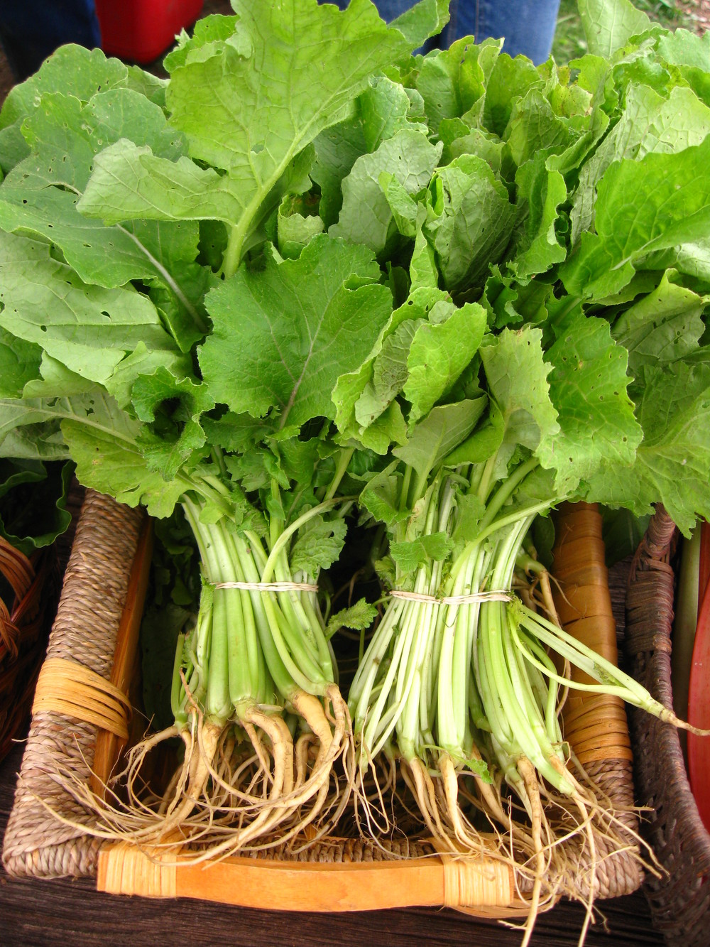 A bundle of Turnip Greens in your CSA box-- source of joy, or source of stress? Now is the time to decide!