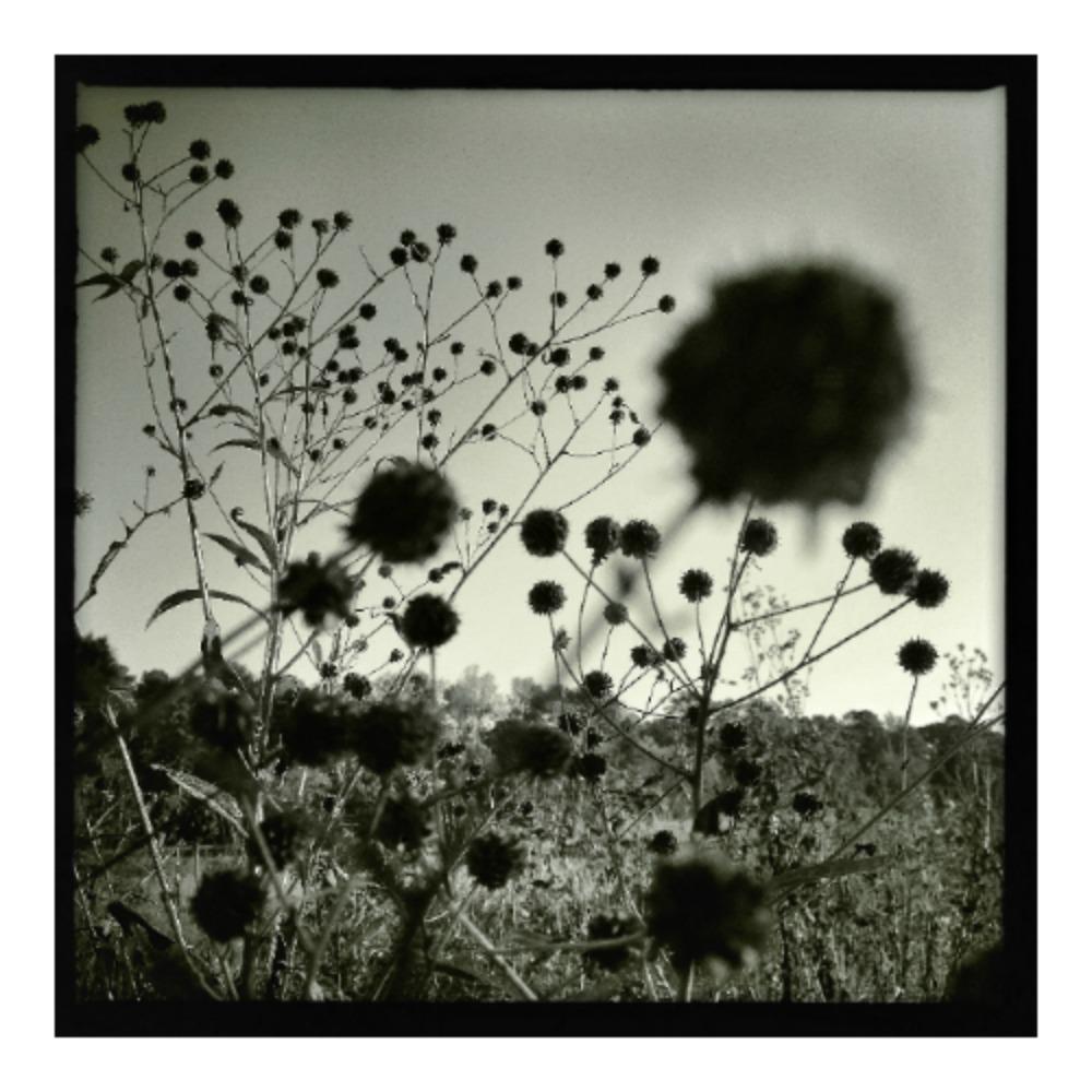 fe507bfc18be-meadow.jpg