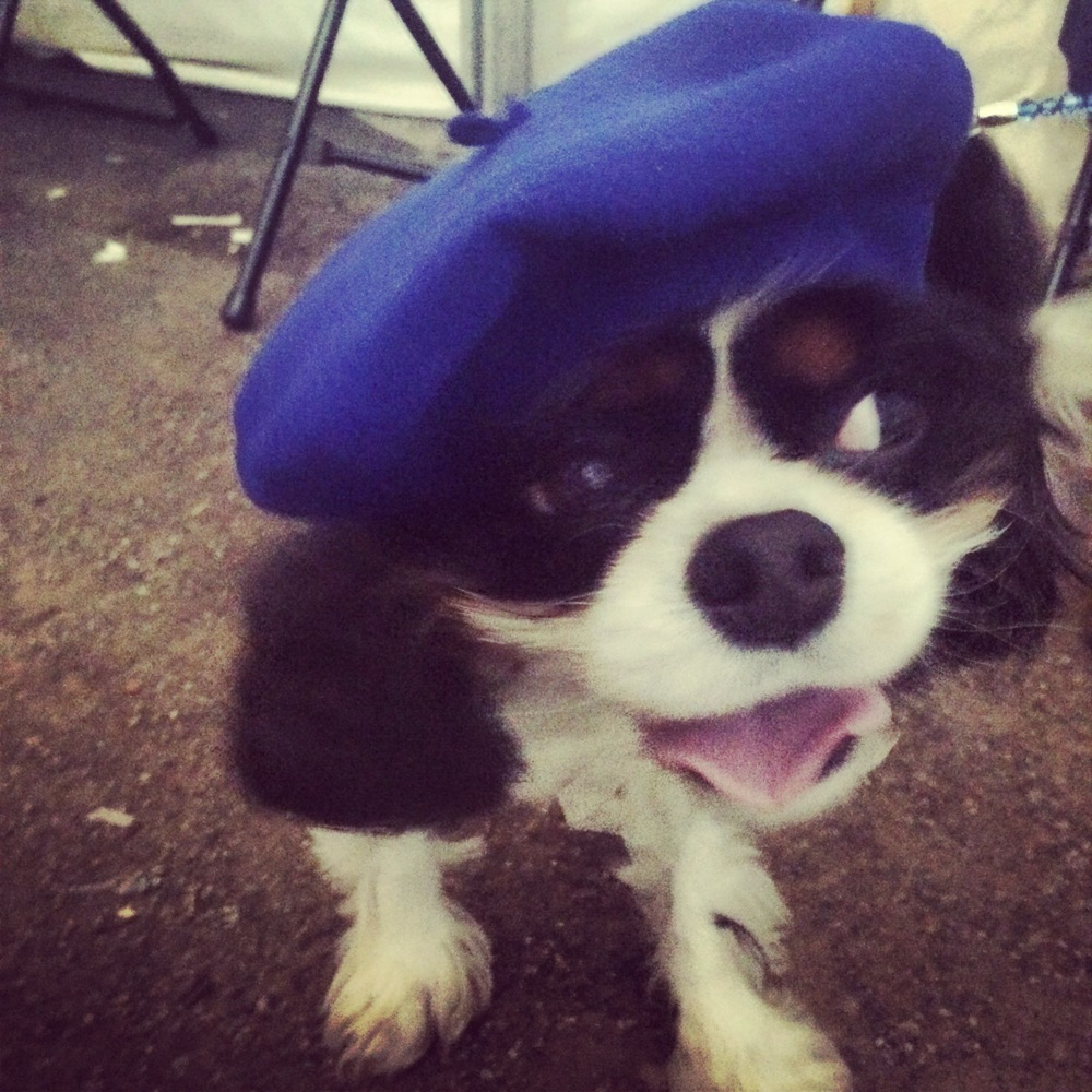 Bruce is fur-shionably French in a blue beret and his very own Pawrisian-looking whiskers!