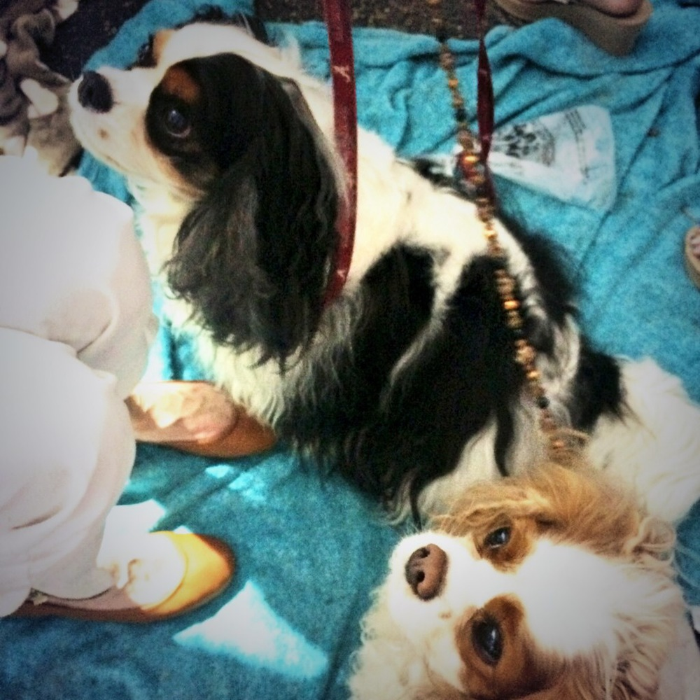 Romeo and Collin wait patiently backstage for a treat before hitting the cavwalk!